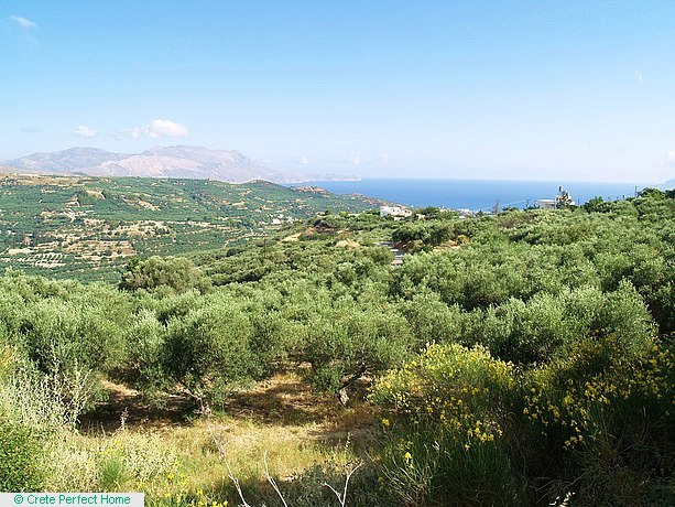 Olive grove with panoramic sea and mountain views