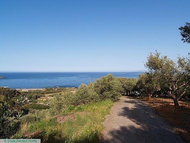 Olive grove with panoramic sea & mountain views