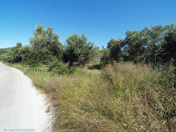 Level olive grove inside/outside village limits, rural views