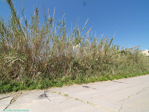 Large plot in town plan, 400m from beach, huge build allowance