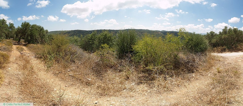 Large sloping secluded olive grove with valley views