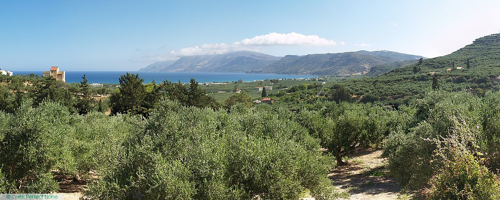 Large olive plot with sea views, huge build allowance