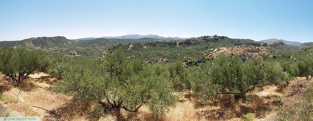 Elevated terraced olive grove, large build allowance, panoramic views