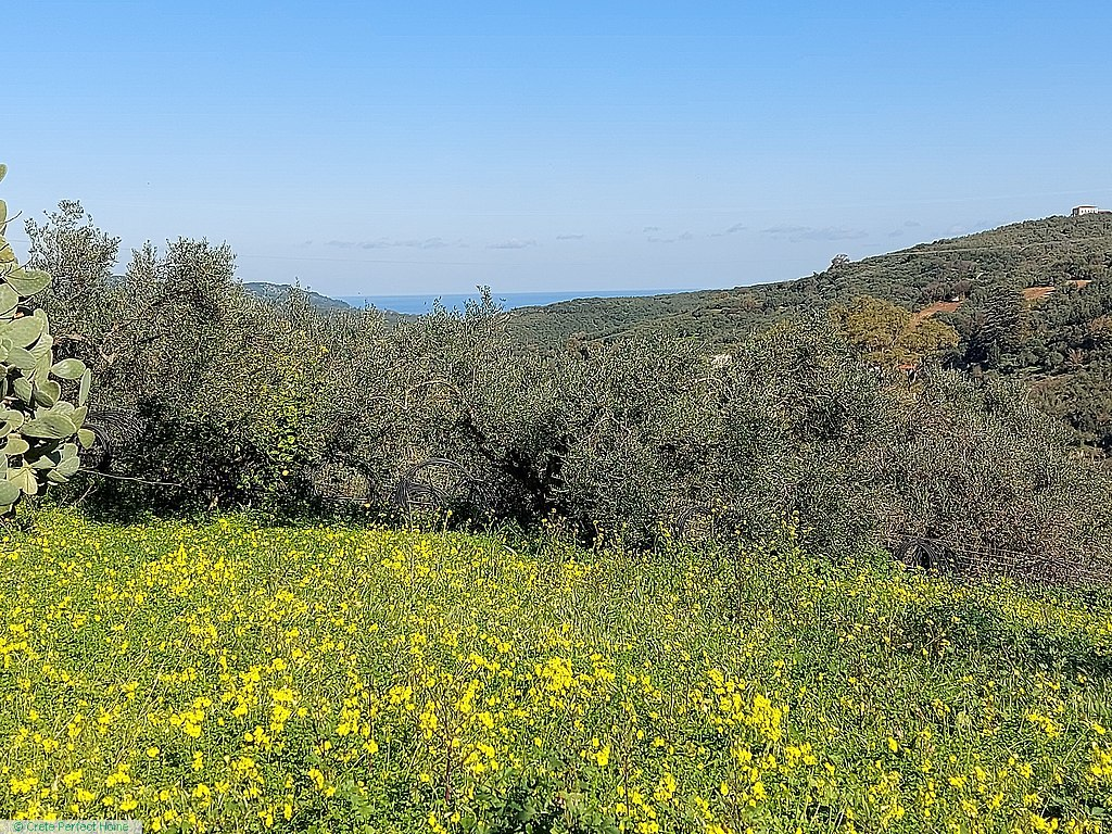 Large plot in village limits for sub-division, sea & rural views