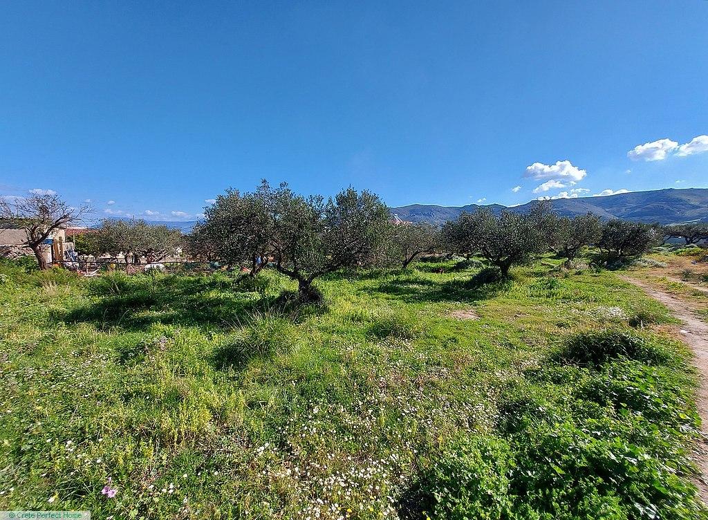 Level plot near Falassarna, rural views, ideal for touristic use