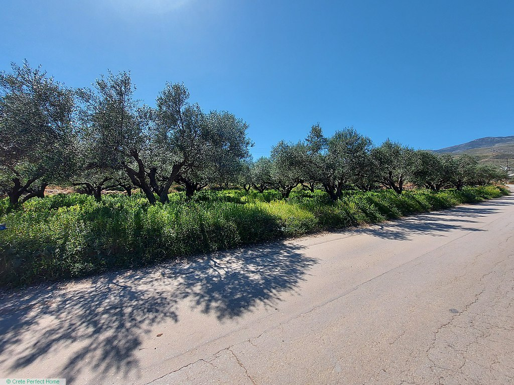Level olive grove 1km from beaches, sea & rural views