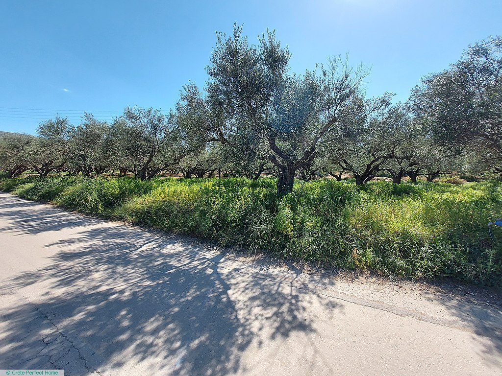 Level olive grove 1000m from beaches, sea & rural views