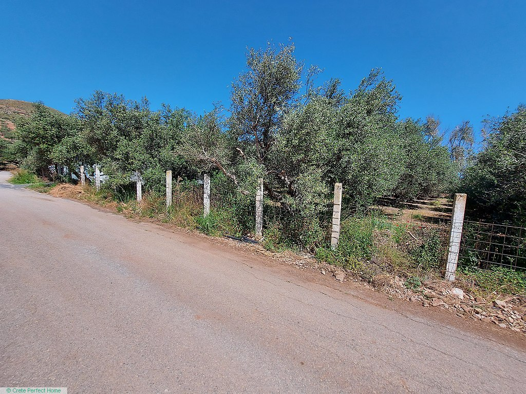 Level olive grove 400m from beaches, sea & rural views