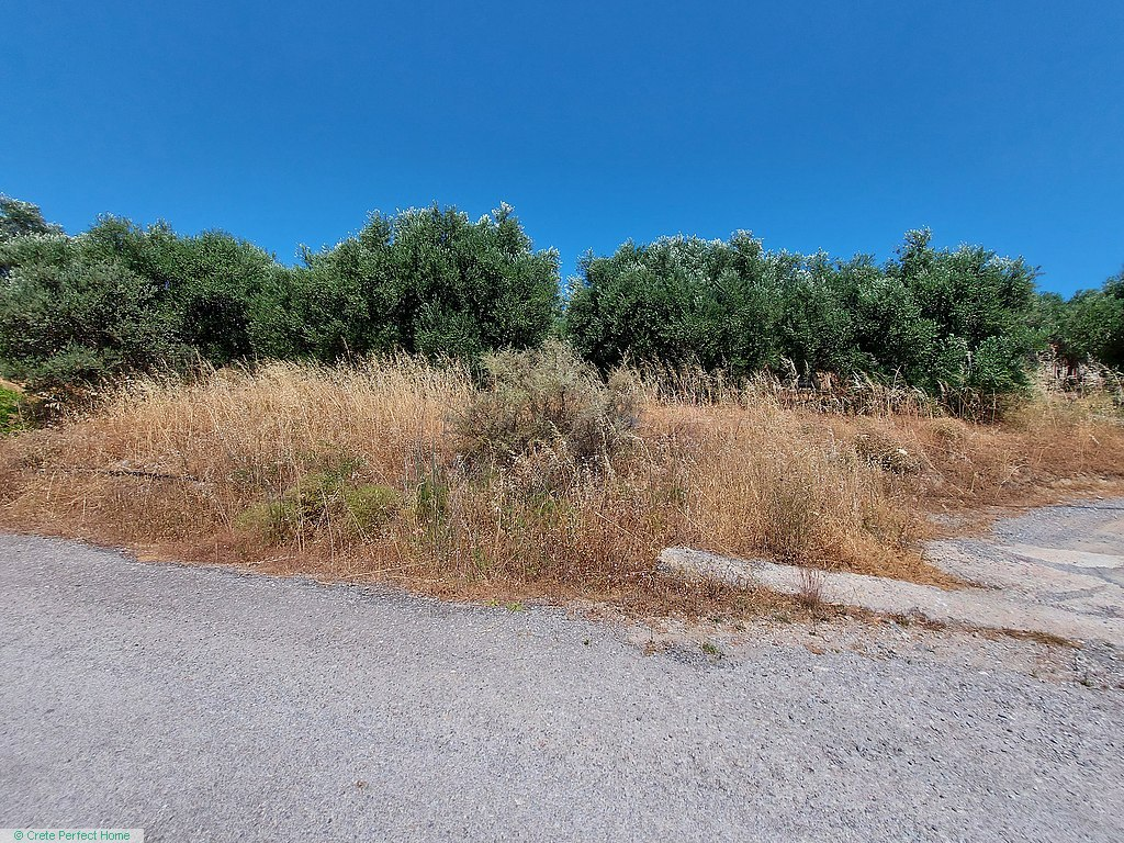 Level olive grove with panoramic rural views, services near by.