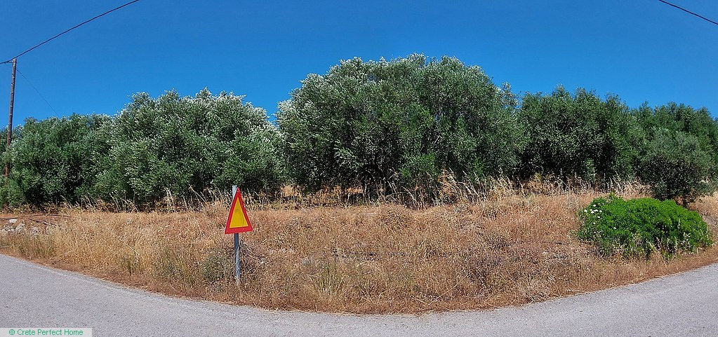 Level olive grove with beautiful rural views, services near by.