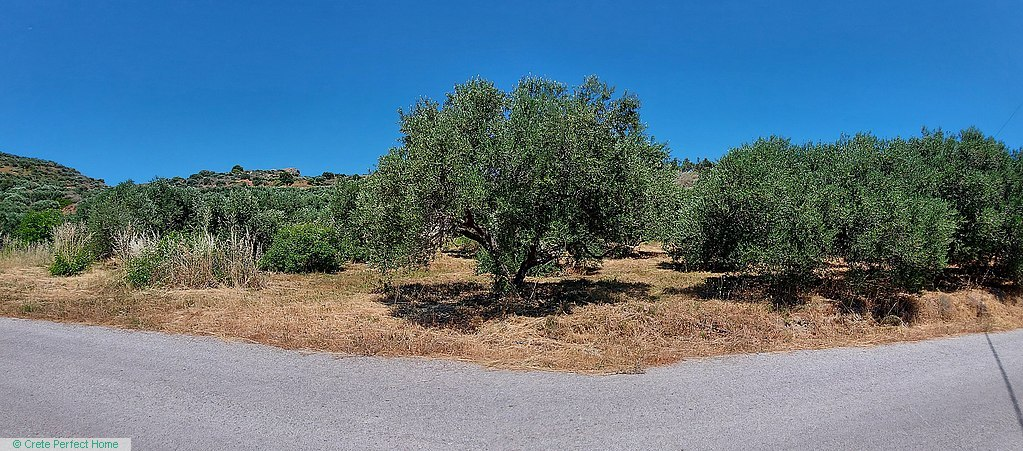 Level olive grove with stunning rural views, services nearby.