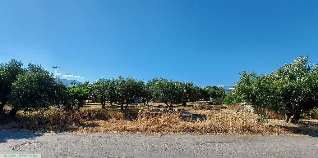 Level olive grove in village, sea view from first floor, close to beaches