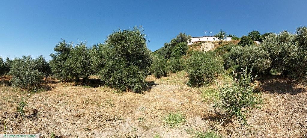 Large olive grove in quite hamlet, huge build allowance