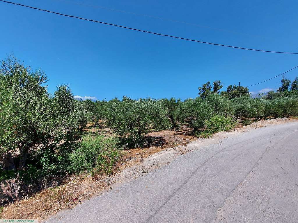 Olive grove 300m from beach, sea view first floor, ideal for tourism